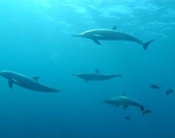 Dolphin Whales Turtle fishing tour villa mango puerto escondido oaxaca mexico